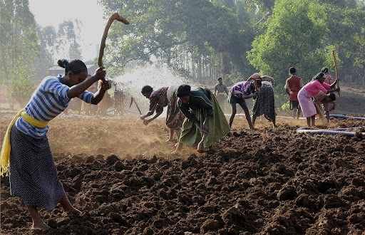Dispatch from ethiopia part iv ethiopian women make the country work rollerbag goddess - Gardening works in october winter preparations ...