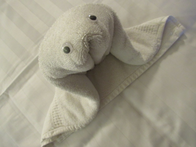 the seal, MS Oosterdam, Holland America Cruise Line towel animal